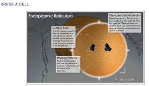 Text, audio and video describe endoplasmic reticulum